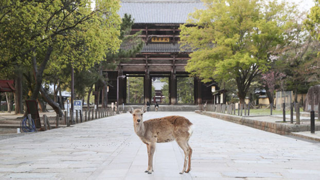 Tōdai-ji temple in Nara on April 16, 2020